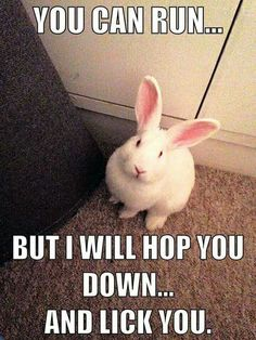 For those who are searching for a furry friend which is not just adorable, but very easy to keep, then look no further than a pet bunny. Cute Baby Bunnies, Funny Bunnies, Cute Baby Animals, Funny Animal Memes, Funny Animal Pictures, Funny Animals, Rabbit Pictures, Bunny Meme, Bunny Puns