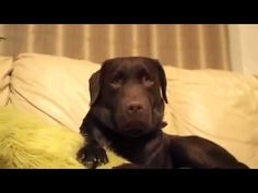 Give this dog an Oscar! Watch as he smiles on cue and expresses 'suddenly alarmed.'