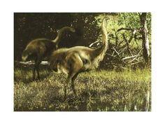 Art Print: Dinornis Maximus Flightless Birds from the Pleistocene Epoch by Stocktrek Images :