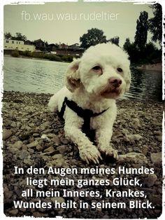 FB.wau.wau.rudeltier In den Augen meines Hundes liegt mein ganzes Glück, all mein Inneres, Krankes, Wundes heilt in seinem Blick. Friedericke Kempner