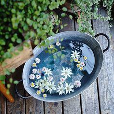 Nature Plants, Foliage Plants, Love Garden, Green Garden, Garden Paths, Garden Landscaping, Floating Flowers, Flower Images, Green Flowers