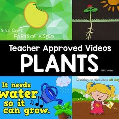 Teacher Approved Video List all about Plants. Everything from the life cycle of plants to how to plant them! These videos about plants are perfect for preschool, kindergarten, and first grade students. First Grade Science, Preschool Kindergarten, Kindergarten Worksheets, Preschool Activities, April Preschool, Spring Activities, Plant Lessons, Science Lessons, Science Videos