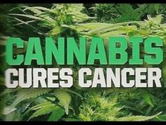 "Rick Simpson's ""Canadian Cancer Cures"" and the Rising Cannabis Oil Movement 