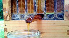 Flow Hive : la ruche révolutionnaire avec robinet pour faire du miel sans nuire aux abeilles | Bio à la une