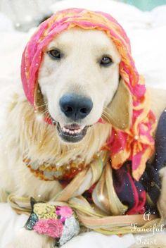 Fortune teller dog