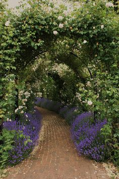 Lavender under a rose arbor (wonder what sort of lavender would thrive in the…