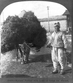 20603. Korean farmer with load of grass for market. c1905. Keystone View Co. Library of Congress