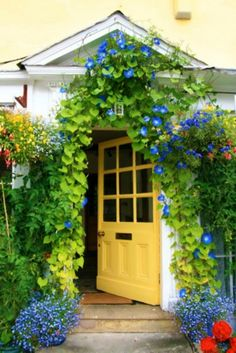 LOVE the morning glories and the yellow door begging me to enter!