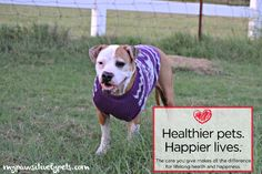 3 Ways to Keep Your Pet Healthy #GetHealthyHappy
