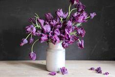 Papouškovité tulipány jsme objevili nedávno a úplně jsme si je na první pohled zamilovali! Kroucené listy dodávají kyticím i záhonům novou texturu. Nejkrásněji působí i při odkvětu, kdy dorůstají velikosti dlaně. Stačí jich opravdu malinko a vytvoří nádherná efekt. Tulipán Victoria's Secret patří mezi pozdně kvetoucí tulipány. Temná vínová barva a dlouhé stonky působí krásně jak ve váze, tak na záhonku. Victoria's Secret, Vase, Plants, Home Decor, Tulips, Decoration Home, Room Decor, Plant, Vases