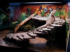 Bearded Dragon cages; lots of examples for inspiration but I will use them as stairs leading to a place to sit for a diorama
