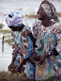 Two Smiling Zanzibari Women Working in Seaweed Cultivation, Zanzibar, Tanzania, East Africa, Africa Photographic Print by Yadid Levy at Art.com