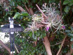 My air orchid that flowers every September without fail Orchids, Seeds, September, Bird, Garden, Flowers, Plants, Garten, Birds