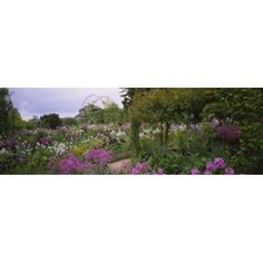 Flowers In A Garden Foundation Claude Monet Giverny France Canvas Art - Panoramic Images (36 x 12)