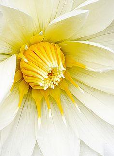 ༺♥༻ Pretty White & Yellow Flower ༺♥༻