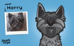 Meet Harry   By Jonathon Chapman from Sketch Your Pet.  Copyright © 2013 Sketch Your Pet. Jonathon Chapman. All rights reserved.