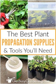 For anyone interested in propagating cuttings and plants at home, having a list of the most useful and necessary equipment and supplies is essential. I've created a helpful guide that includes just that: all of the plant propagation supplies you need to have, plus tools I recommend to increase your chances of success. From the best rooting mediums, to the benefits of grow lights, and why you should use rooting hormone, you'll walk away ready to get your DIY propagation station starte Plant Propagation, Cuttings, Free Plants, Cool Plants, Growing Vegetables, Growing Plants, Vegetable Garden, Garden Plants, Rubber Plant