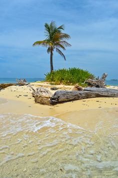 One Palm Island - San Blas Islands, Panama - There's just enough room for a lone palm tree and maybe a lounge chair on this tiny dot of sand off the Caribbean coast of Panama   - Explore the World with Travel Nerd Nici, one Country at a Time. http://TravelNerdNici.com