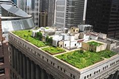 6_Chicago-City-Hall-Green-Roof