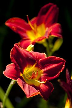 Ahem. Just wanted to chime in with a small reminder: this is happening all along Daylily Walk. Right now.