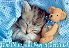 Image result for good night kitty