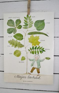 Learn your deciduous trees - by Julia (Swedish artist) Science For Kids, Science And Nature, Art For Kids, Kids Artwork, Garden Theme, Classroom Inspiration, My Secret Garden, Simple Art, Toddler Activities