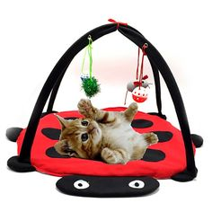 THIS CAT PLAY BED is something every cat needs. Your furry children on paws will get crazy about this CAT PLAY BED! Features: 1. This cat kitty hammock bed is suitable for all kinds cat, and it will be a comfortable choice for your kitten to play around. 2. 4 kitty hanging balls and toys.They are removable, so you can remove any single toys and let your cat play different toys in different days. 3.your cats can play 4 different toys while it\'s laying down on soft and comfortable fleece…