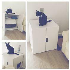 Buenos días! Hoy os quiero enseñar una forma genial en la que podéis integrar un arenero para gatos en vuestras viviendas! Es muy sencillo, podéis aprovechar cualquier mueble viejo o hacer como yo!…