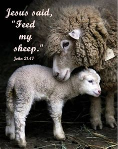 """Do you love me?...Feed my sheep"" ~Jesus More at http://ibibleverses.christianpost.com/"