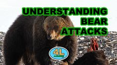 If you're going camp in bear country this season, here's simple refresher on ways to avoid bear attacks Bear Attack, Camper Life, Camping, Caravan, Mammals, Tent, Fishing, Survival, Seasons