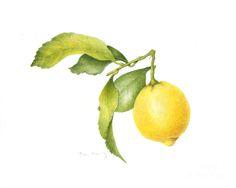 lemon+paintings | Lemon Painting by Fran Henig - Lemon Fine Art Prints and Posters for ...