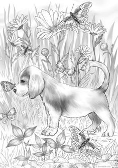 Horse Coloring Pages, Dog Coloring Page, Printable Adult Coloring Pages, Cute Coloring Pages, Coloring Sheets, Coloring Books, Cool Art Drawings, Animal Drawings, Colorful Pictures