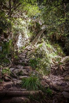 'Stairway to Heaven' Photographic Print by Roxanne du Preez Stairway To Heaven, Tree Forest, Create Image, Our World, Sell Your Art, Forests, Stairways, Absolutely Stunning, Print Design