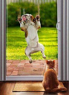 Dog running into door