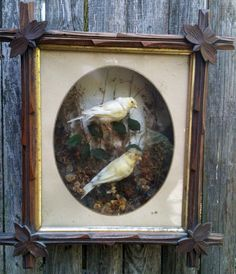 WANT!!! Antique Taxidermy Diorama VIctorian Adirondack by invisiblegallery, $499.00