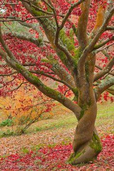 当一颗树不再炫耀自己叶繁枝茂,而是深深扎根泥土,它才真正的拥有深度;当一颗树不再攀比自己与天空的距离,而是强大自己的内径时,它才真正的拥有高度。