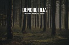 Dendrofilia: amor por el bosque y los árboles.