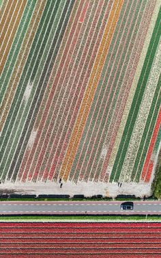 Aerial photos show just how beautiful Netherlands' tulip fields are