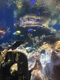 The GromMom blog. Full of lists of favorite places/activities/foods and more on North Shore Oahu! North Shore Oahu, Punch, Aquarium, Foods, Vacation, Activities, Places, Blog, Goldfish Bowl
