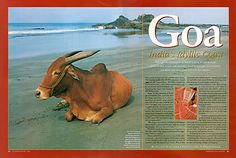 Goa India's Idyllic Coast Goa India, Outdoor Activities, Places To Go, Coast, The Incredibles, Ocean, Extreme Sports, History, Adventure Travel