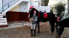 #concurso #navidad #caballos #hipica #fotos #navideñas