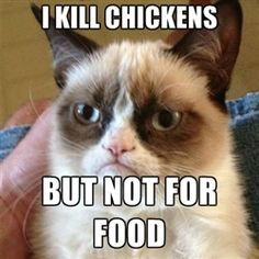 Grumpy Cat 1 - I kill chickens but not for food