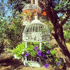 Birdcages as planters