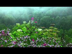 Tibetan Healing Sounds #1 -11 hours - Tibetan bowls for meditation, relaxation, calming, healing - YouTube