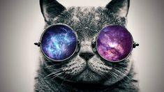 Bilderesultat for cats with sunglasses