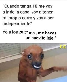 Discover recipes, home ideas, style inspiration and other ideas to try. Really Funny Memes, Stupid Memes, Stupid Funny, Funny Spanish Memes, Spanish Humor, Humor Dental, Mexican Memes, New Memes, Ms Gs