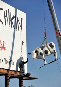 Billboard installer waves goodbye to the Chik-Fil-A cow being removed from an Amarillo, TX billboard.