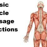 Massage Monday - 3 basic muscle massage directions  Happy Massaging!
