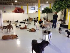 Canine Adventure Den Daycare in Vancouver BC Canada used the Steady Freddy Vinyl Privacy for their dog daycare fencing! Meds For Dogs, Dog Meds, Pet Daycare, Daycare Ideas, Dog In Spanish, Dog Comparison, Indoor Dog Park, Dog Enrichment, Dog Hotel