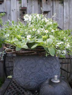 een pot vol bloemen.